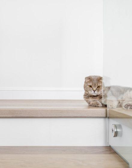 Medinės grindys, ąžuolo masyvo laiptai: spalva 3408 Balta. Medinės durys: dažytos RAL 9003, modelis ED2F.